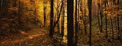 jesenným lesom