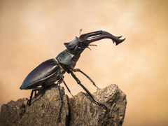 Kráľ chrobákov