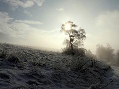 slnko v strome
