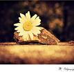 Príbeh kvetu ..