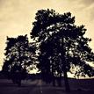Cesta, Stromy, Príroda
