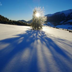 Zimná tieňohra