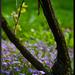 kvety pod vinicom