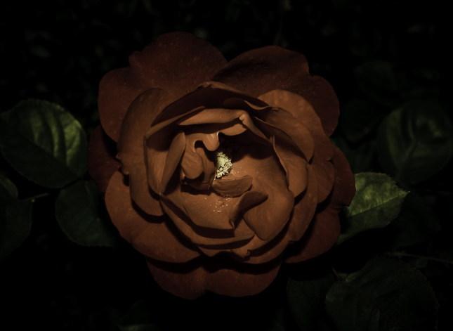 smutná ruža