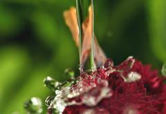 Water the garden!