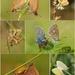 Motylie lásky