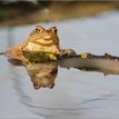 Žabák.