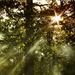 Snívanie o lese