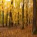 Jesenná impresia