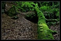V tieni lesa