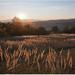 polné trávy