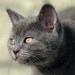caty-