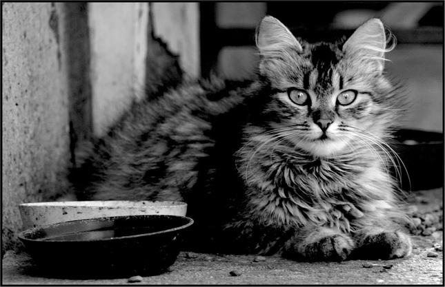 moja macka