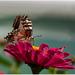 Potvorky /hmyz