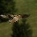 Vietor v krídlach