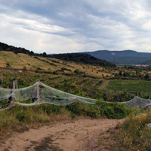 Vinohradnícka oblasť Pezinok