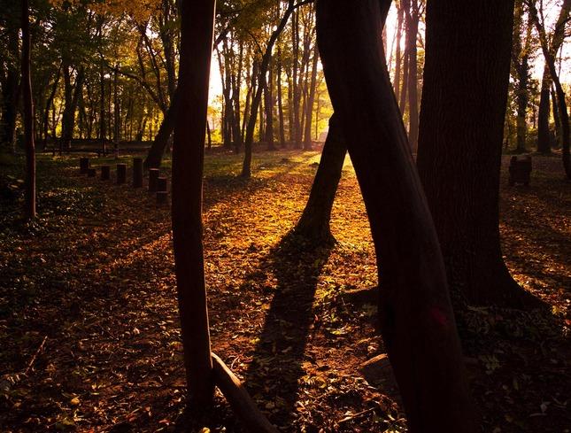 Slnečná jeseň