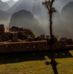 Obyvateľ Machu Picchu