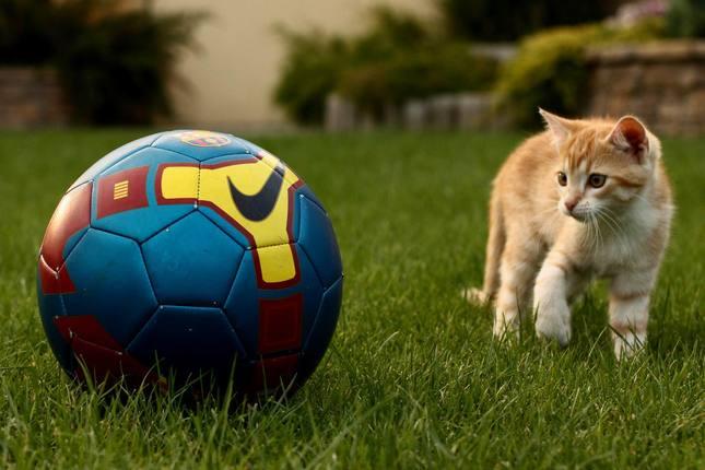 Futbalová nádej