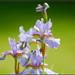 Flower-piece