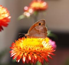 Motyl leta priletel