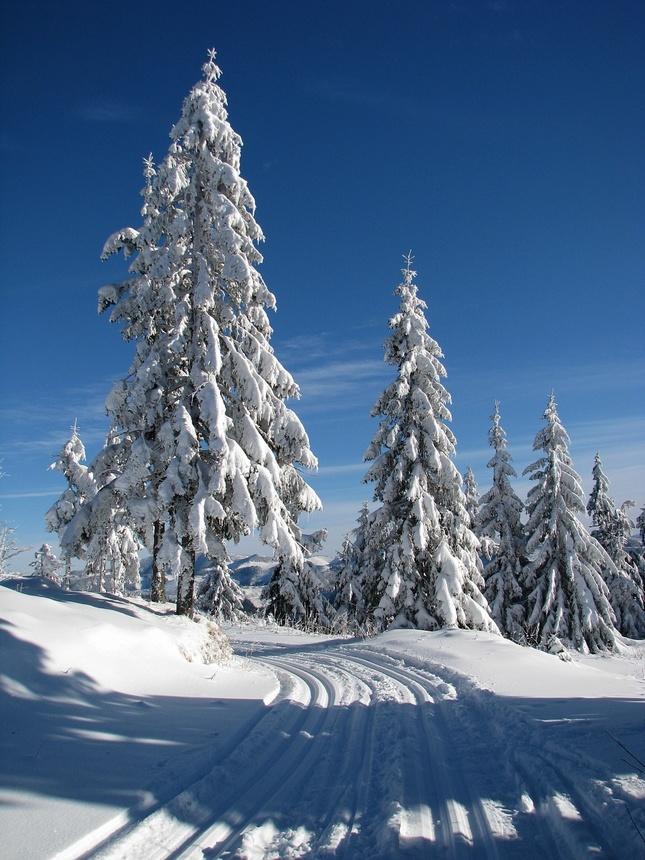 Zimnou krajinou 2
