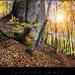 .: Súľovské skaly - les :.