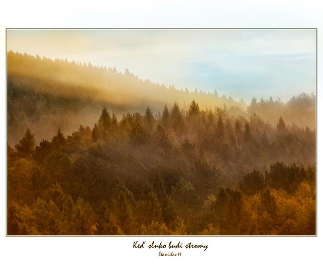 Keď slnko budí stromy ....