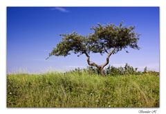 sam strom