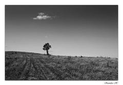 osamely