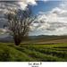 len strom II