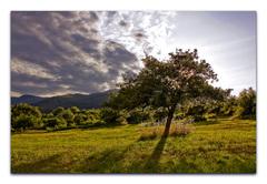 strom v zapade