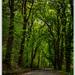 Cesta gaštanovým lesom...