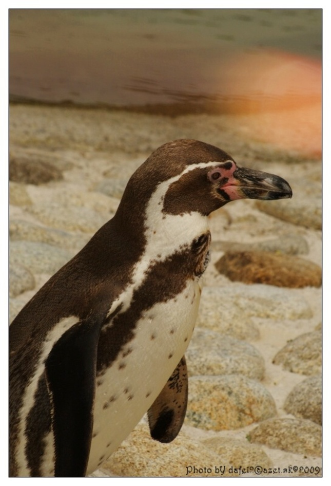 pinguin :-)