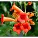 Kvet II