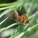 Motýľ1
