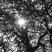 Slnko v korune stromu