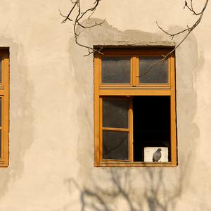 Dom holubí IV.