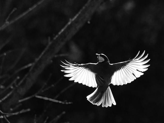 stále v prdeli veľké vtáky čierna ľudia majú sex video