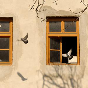 Dom holubí I.