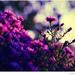 ....light & colours........