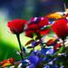 ružová....................