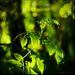 green & light..........