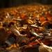 jesenná cesta