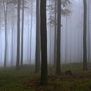 """1. 11. 2016  """"Dušičkový les"""""""