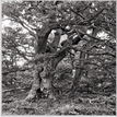 V pralese Javorníkov