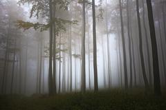 V lese podsitnianskom