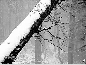 Diagonála lesa