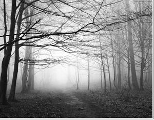 V lese za udiarňou II.