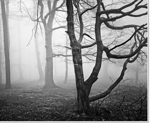V lese za udiarňou I.